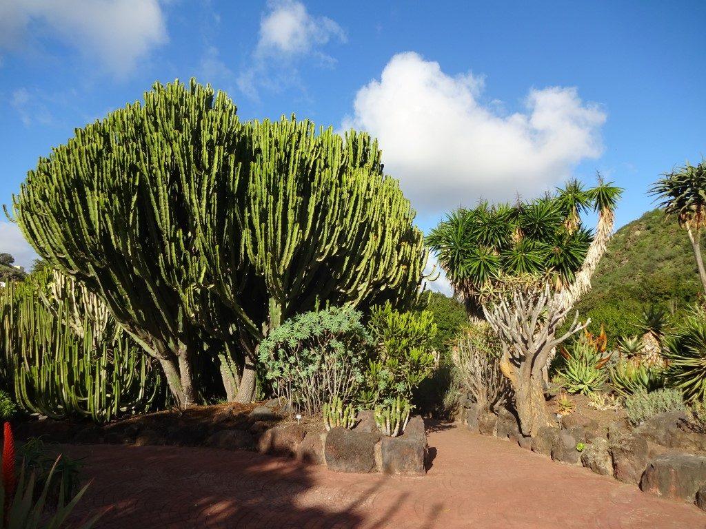 Botanischer Garten Tafira Las Palmas Gran Canaria