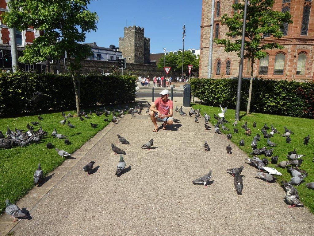 Derry Tauben Park Irland
