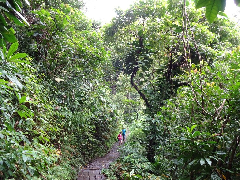 Trail Dschungel Road to Hana Maui Hawaii