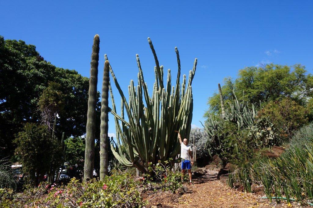 Kaktus Kakteen groß riesig Honolulu Oahu Hawaii