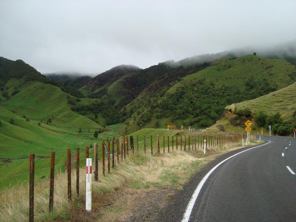 Matawai Schafe Nordinsel Neuseeland