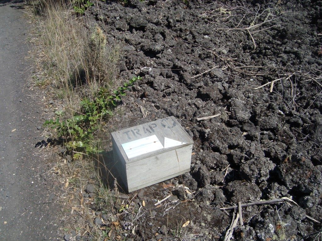 Falle Tiere Raubtiere Eier Rangitoto Nordinsel Neuseeland