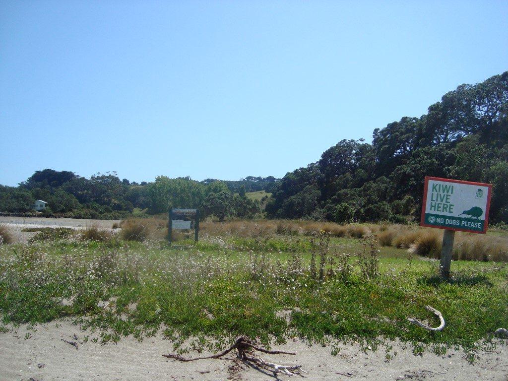 Rangitoto Island Kiwi Ansiedlung Vogel aussterben bedroht Nordinsel Neuseeland