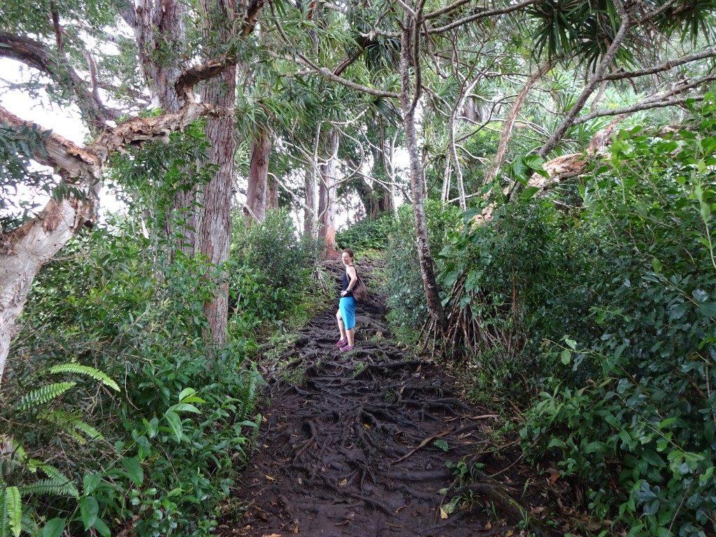 Wurzeln Wald Dschungel Maui Hawaii