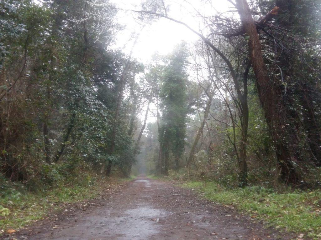 Laufen Joggen Pinienwald Cervia Italien