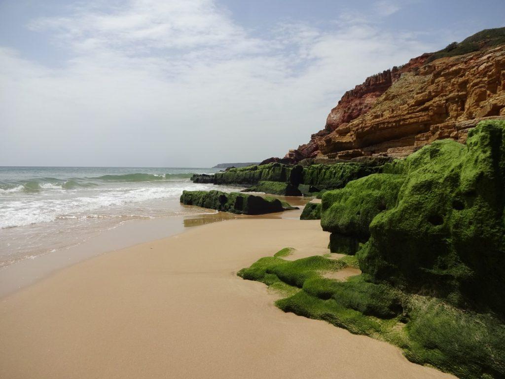 Algen Felsen Küste Salema Algarve Portugal