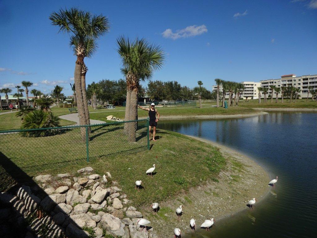 Manatee Sanctuary Park Cape Canaveral Florida