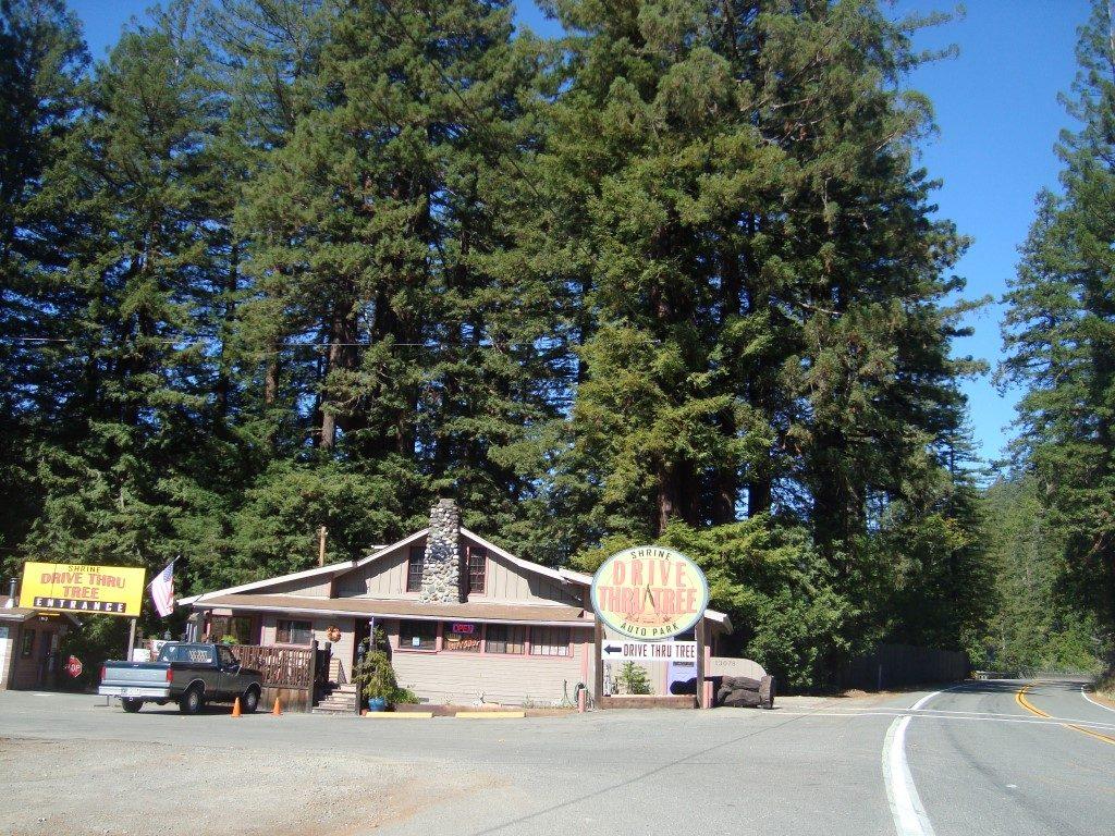 Drive Thrue Tree Baum Durchfahren Kalifornien