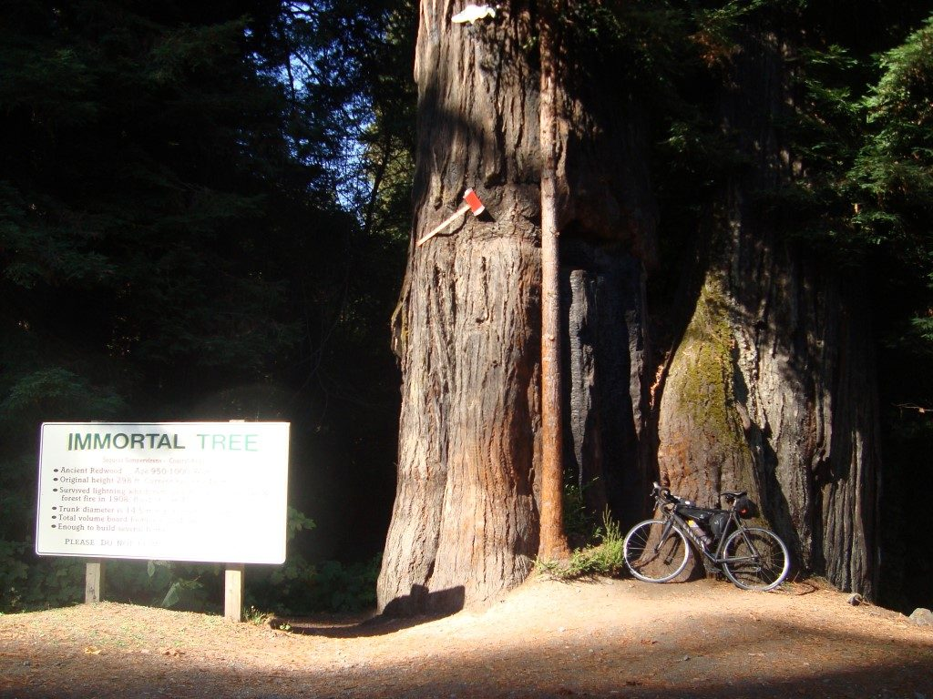 Avenue of Giants Redwoods Immortal Tree unsterblicher Baum Kalifornien
