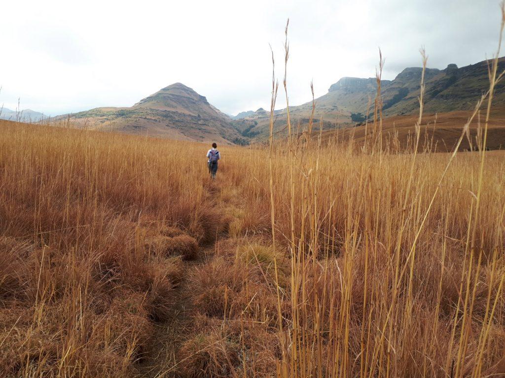 Steppe Cobham Drakensberge Südafrika