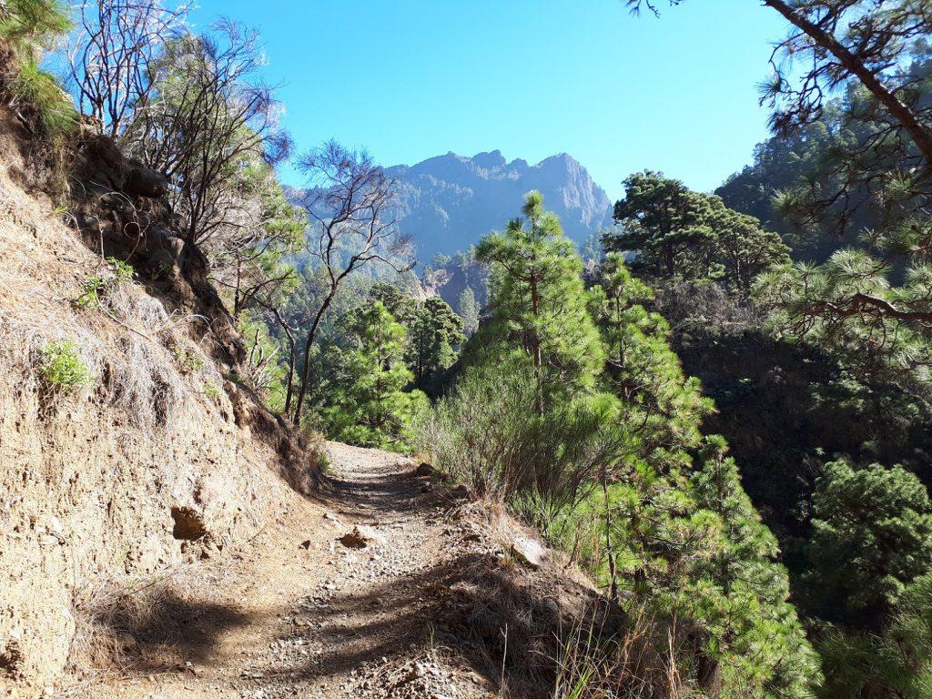 Trail Wanderung Caldera Nationalpark La Palma Kanaren