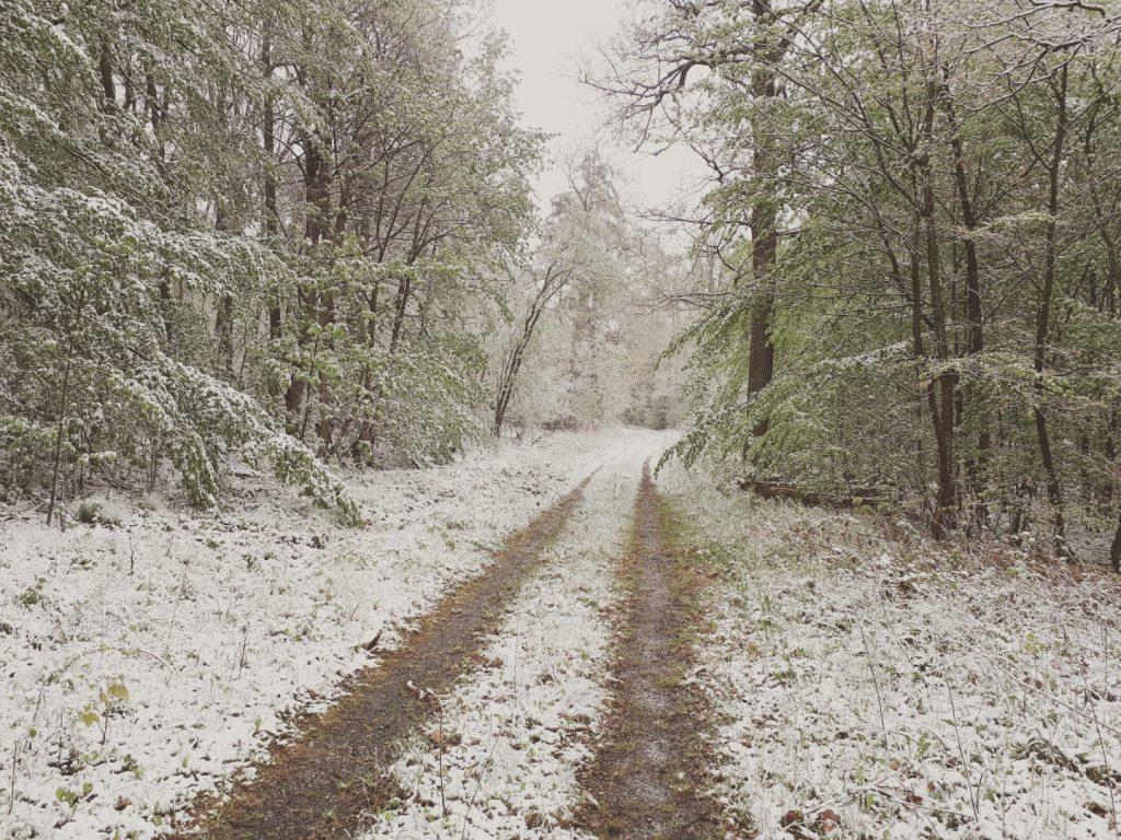 Schnee Rhön Run Across Germany Deutschlandlauf