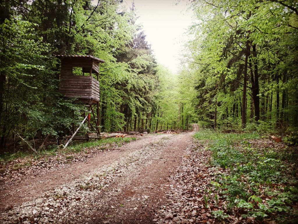 Wald Google Maps Run Across Germany Deutschlandlauf