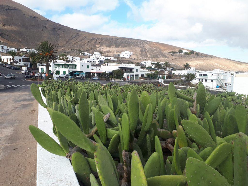 Femes Kaktus Kakteen Lanzarote Kanaren