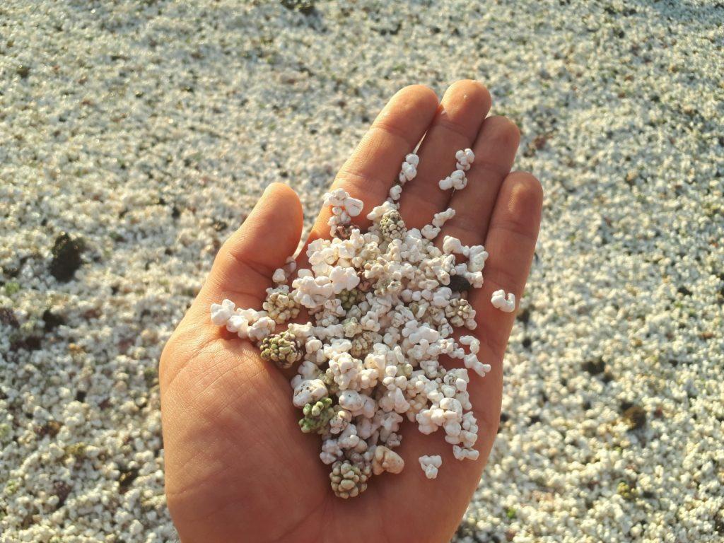 Sand Steine in Corralejo Fuerteventura Kanaren