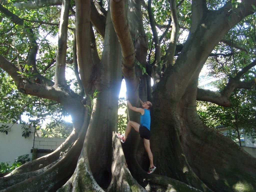 Auckland Park Baum klettern Nordinsel Neuseeland