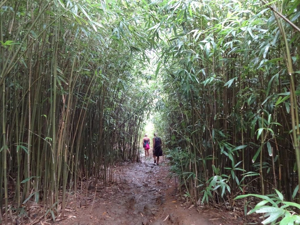Bambus Trail Road to Hana Maui Hawaii