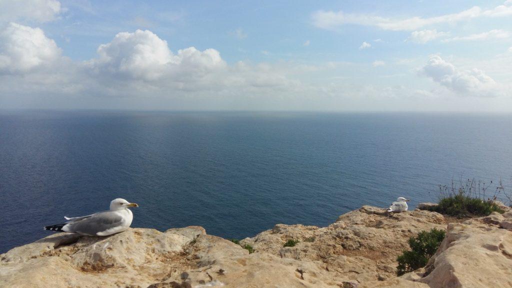 Möwe Leuchtturm Faro de Formentera