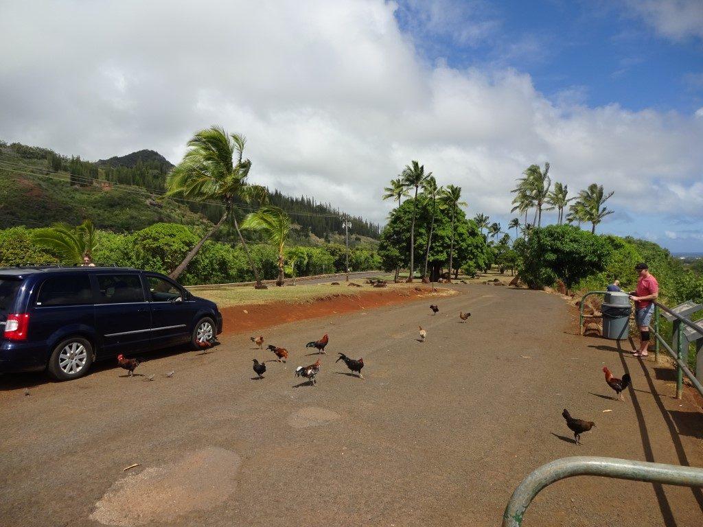 Huhn Hühner Touristen füttern Kauai Hawaii