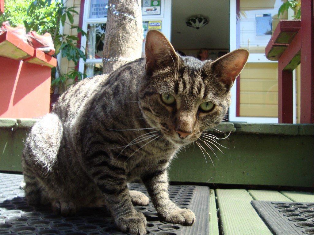 Bazil Hostel Katze Westport Südinsel Neuseeland