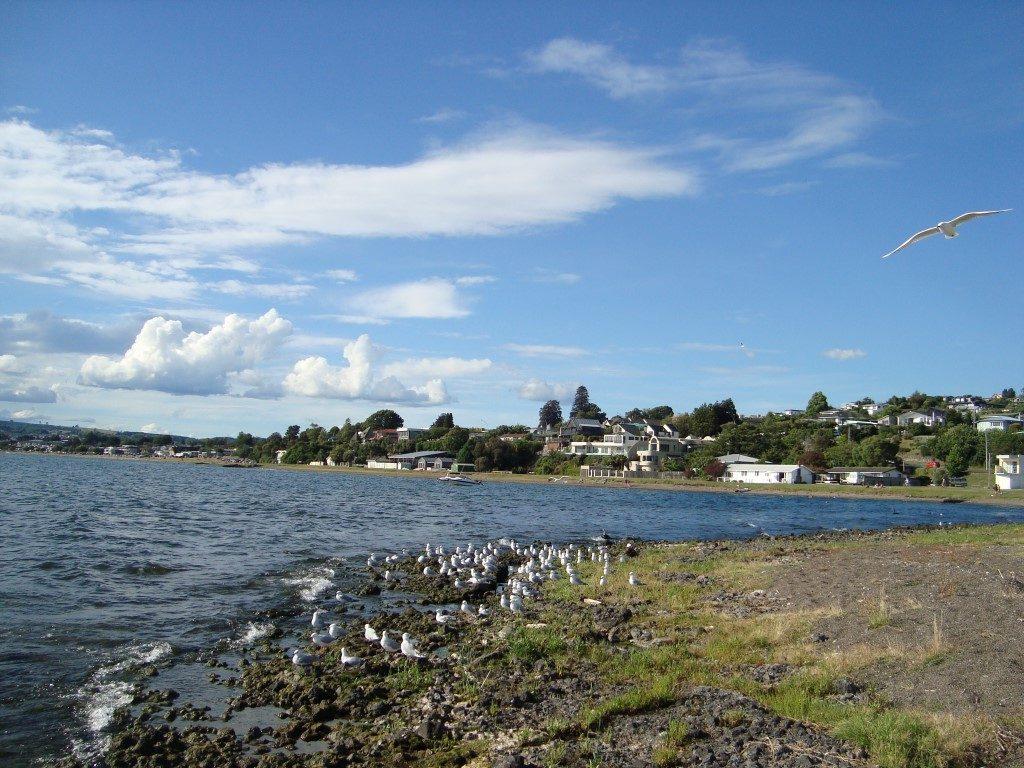 Lake See Taupo Nordinsel Neuseeland