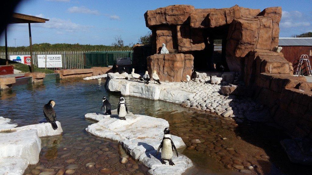 SAMREC Bird House Cape Recife Pinguin verletzt Südafrika