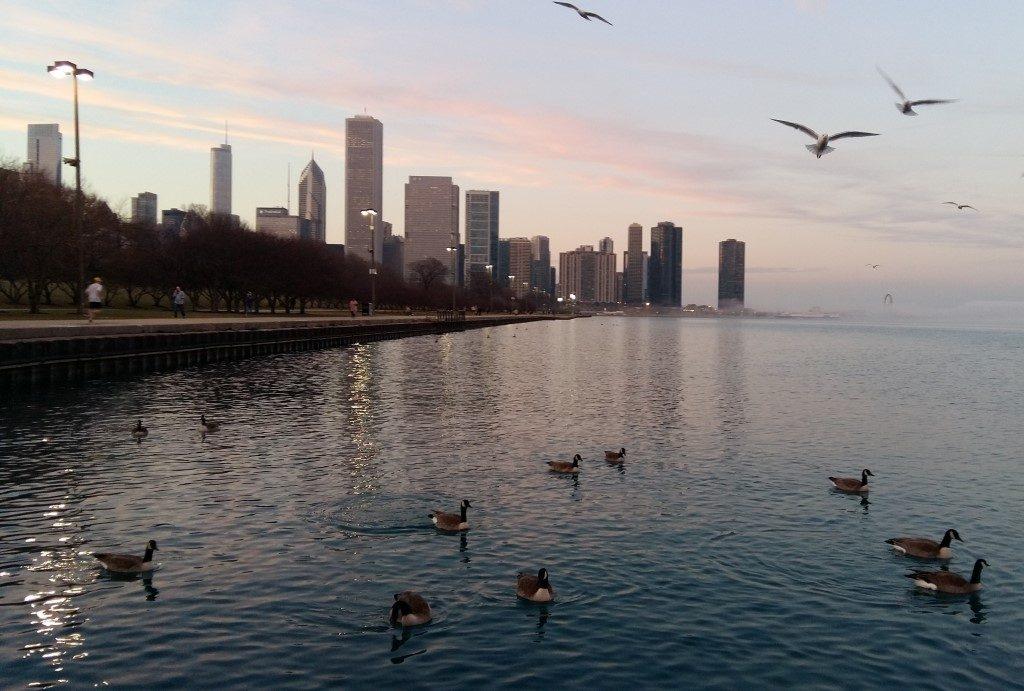 Chicago Skyline Lake Michigan Enten Gänse Illinois