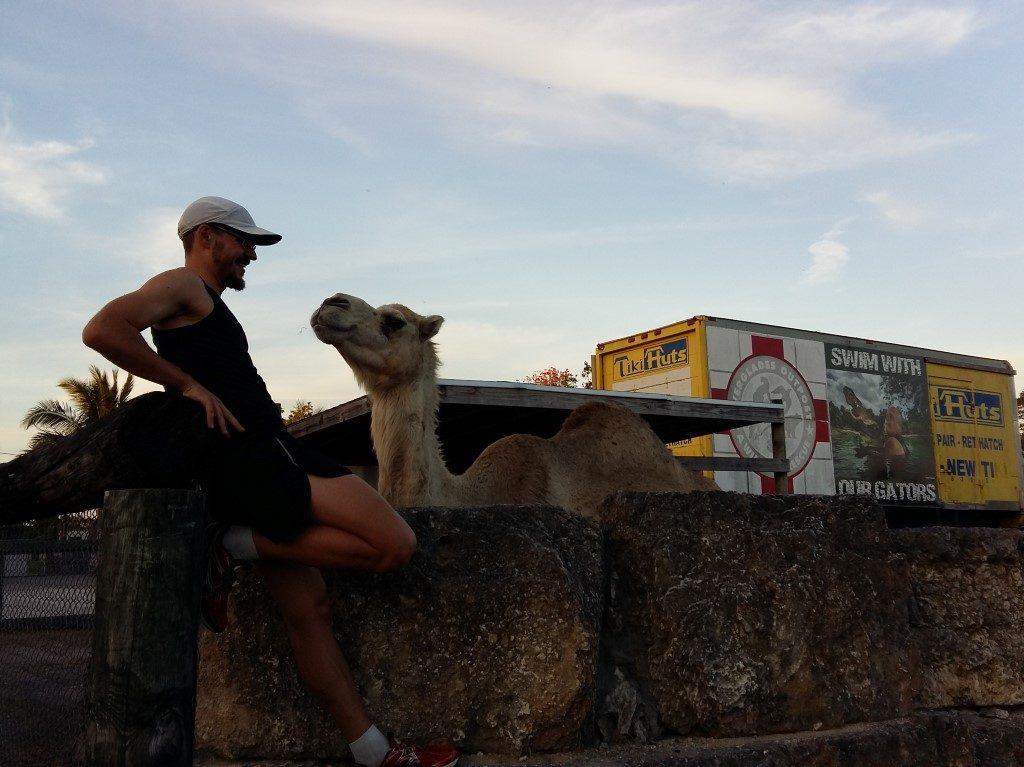 Kamel Jogging Laufrunde Florida City