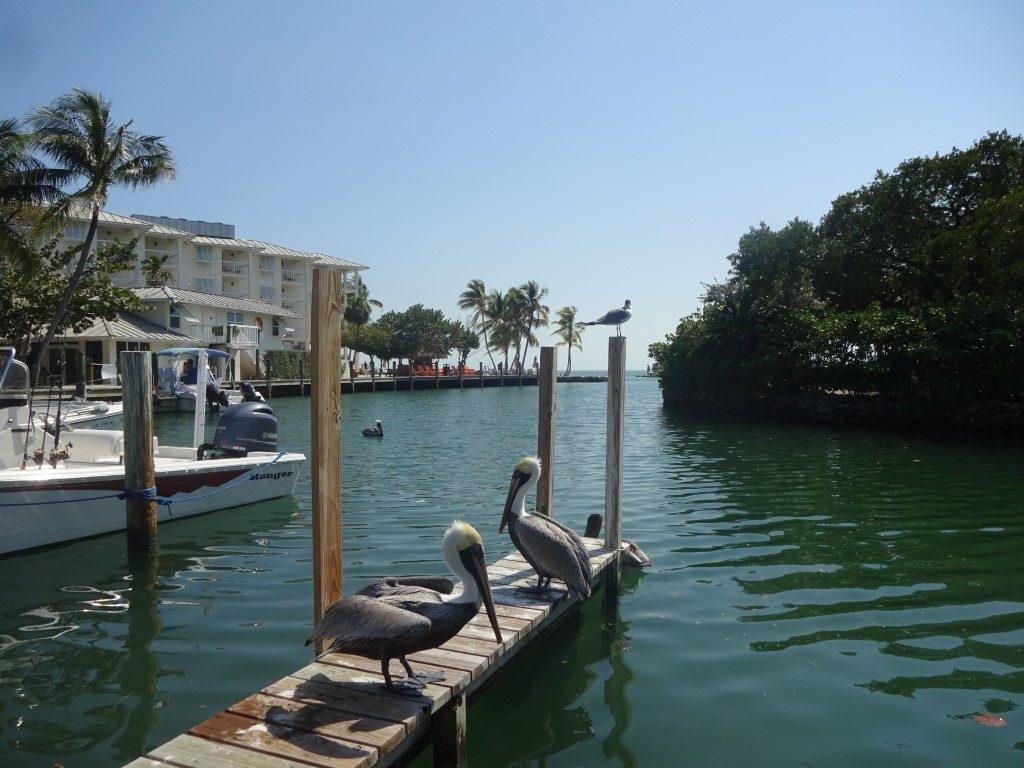 Pelican Cove Windley Key Florida