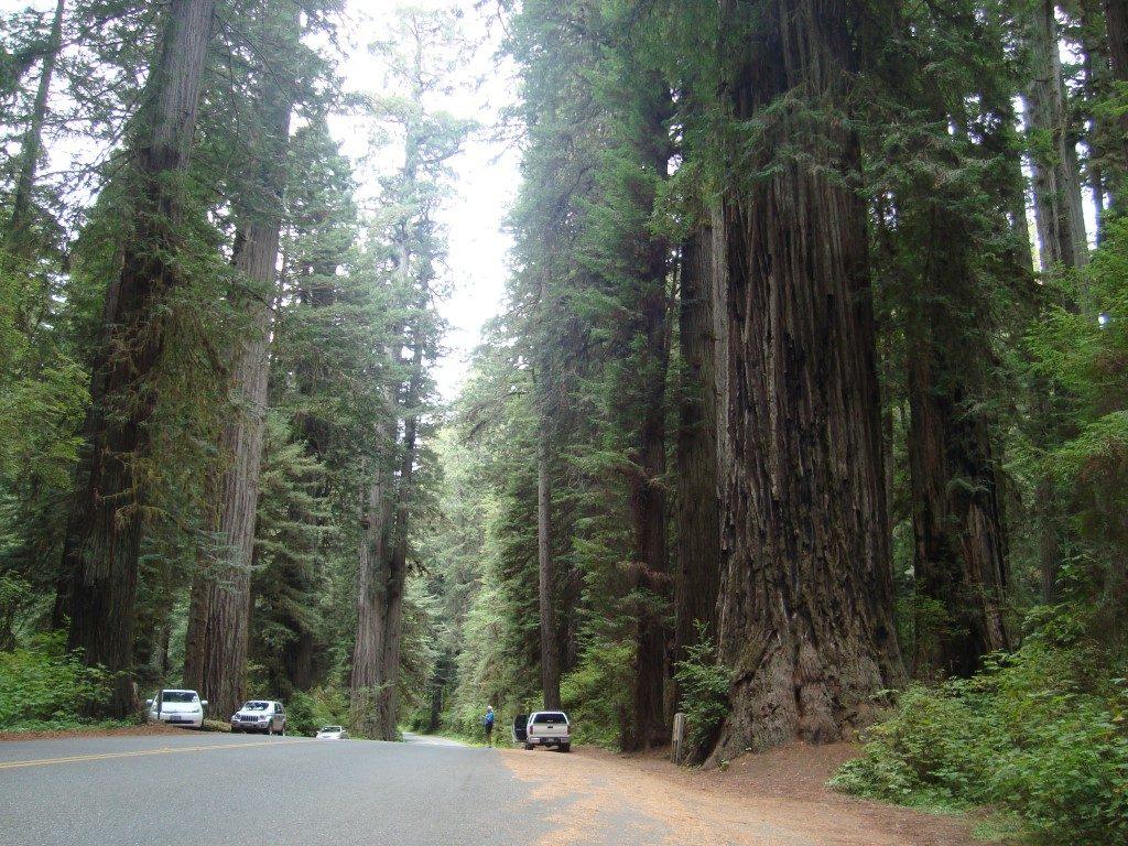 Avenue of Giants Redwoods Kalifornien