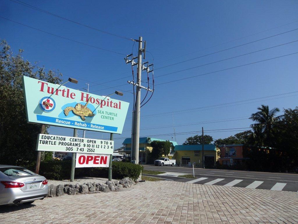 Turtle Hospital Marathon Florida