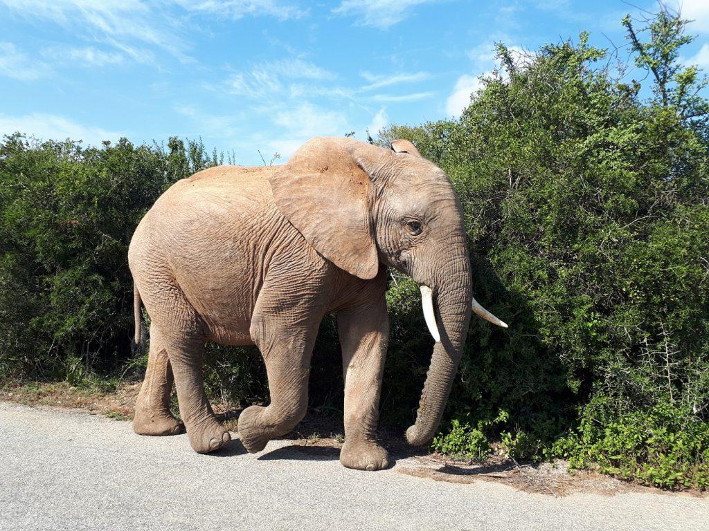Addo Elephant Park Südafrika