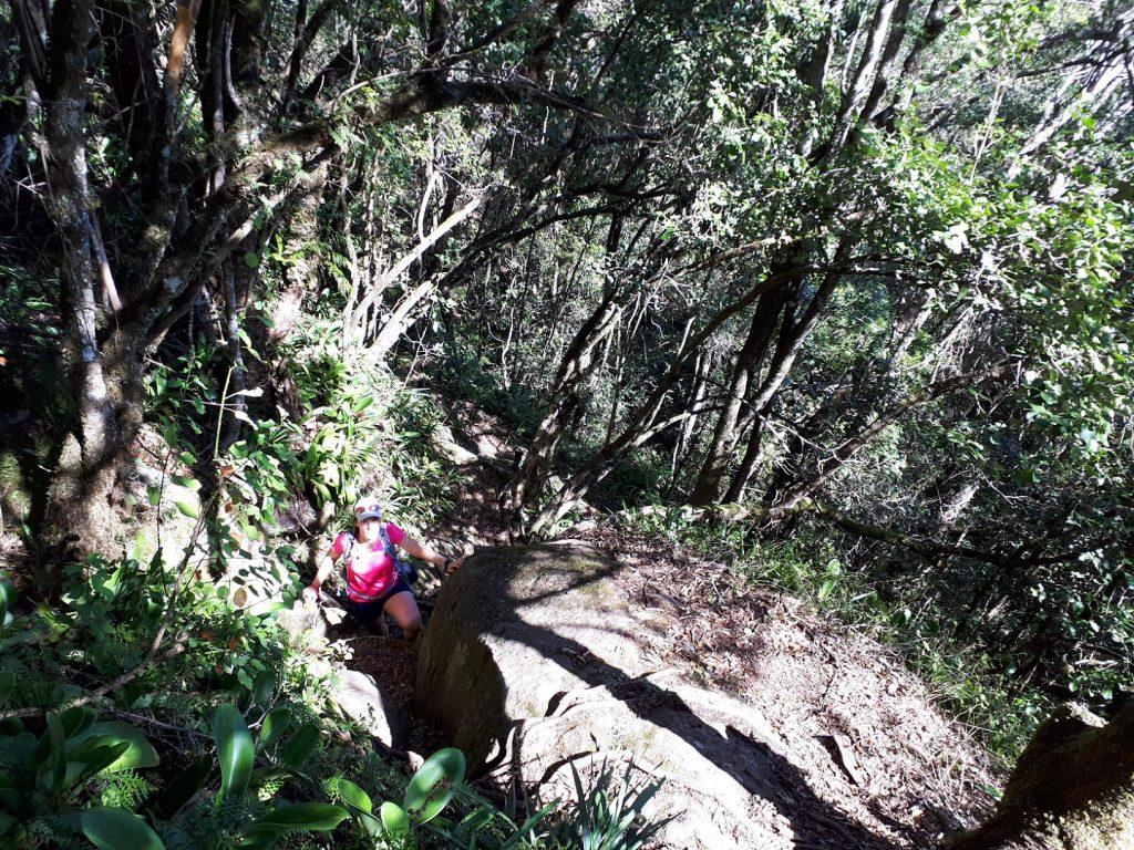 Dschungel Trail Zecken Hogsback Südafrika