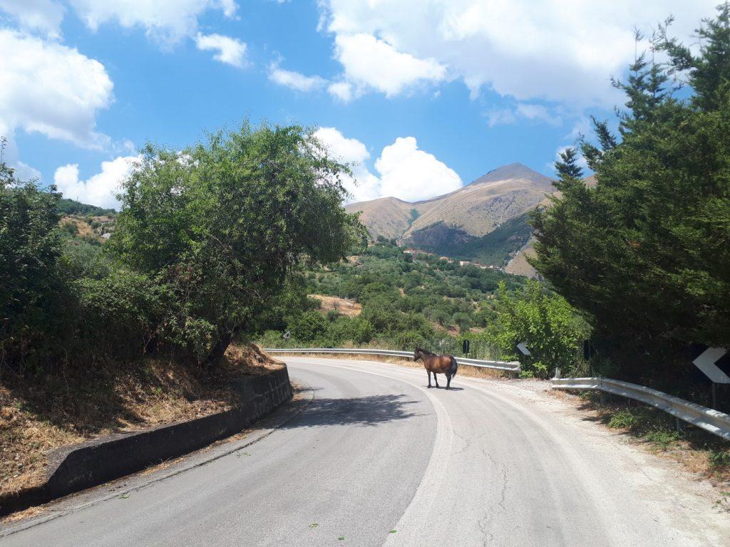 Pferd delle Parco Madonie Sizilien Italien