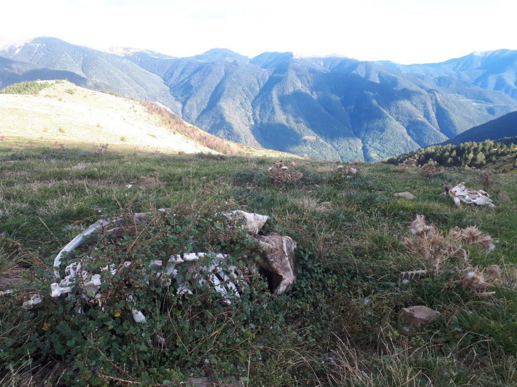 Skelett Kuh Geier Gänsegeier Pyrenäen