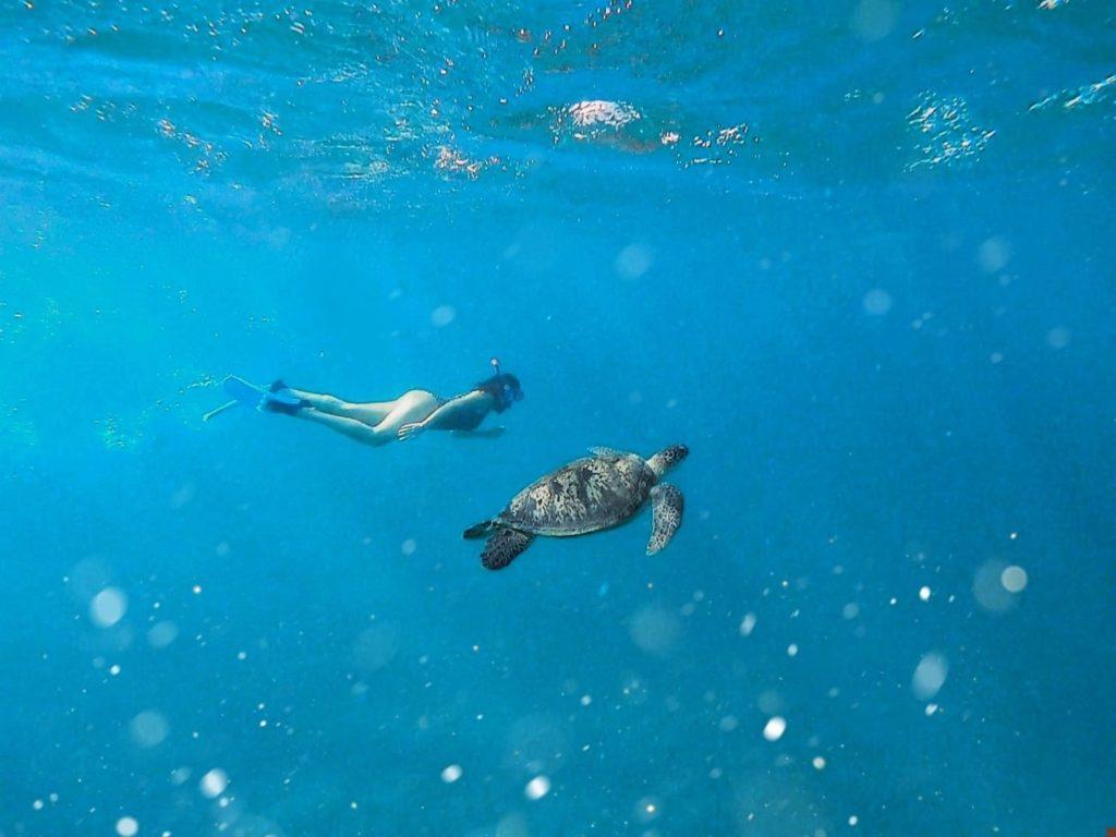 Schildkröte Schwimmen Marsa Alam Ägypten