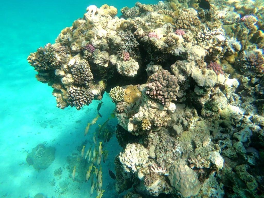 Unterwasserwelt Schwimmen Marsa Alam Ägypten