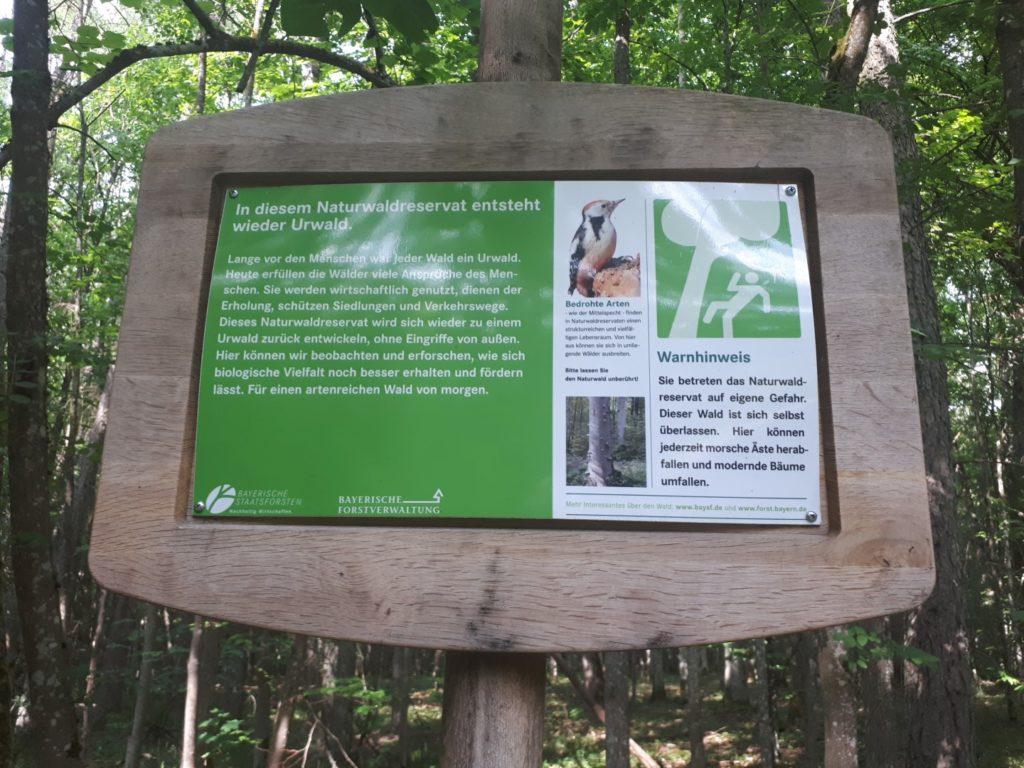 Naturwaldreservat Dachsbau Urwald
