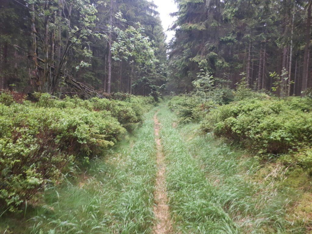 Rennsteig Singletrail Thüringer Wald