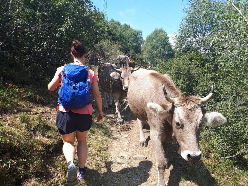 Mindestabstand Kühe Tessin Schweiz