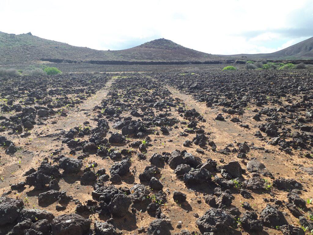 Lava Trail Lanzarote Kanaren
