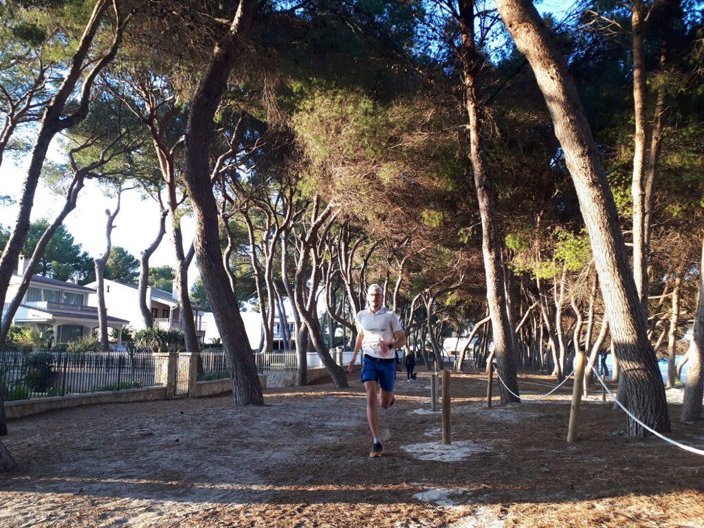 Pinienwald Port d'Alcudia Mallorca