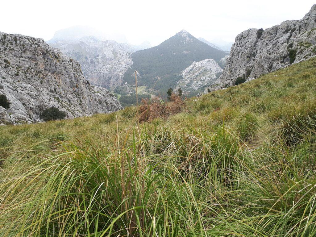 Wiese Trail Offtrail Tramuntana Mallorca