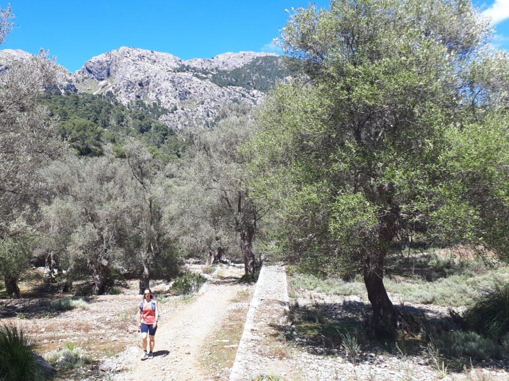 GR 221 Tossals Verds Tramuntana Mallorca